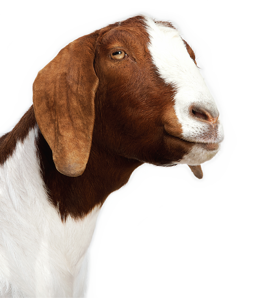 Profile picture of TransGoat