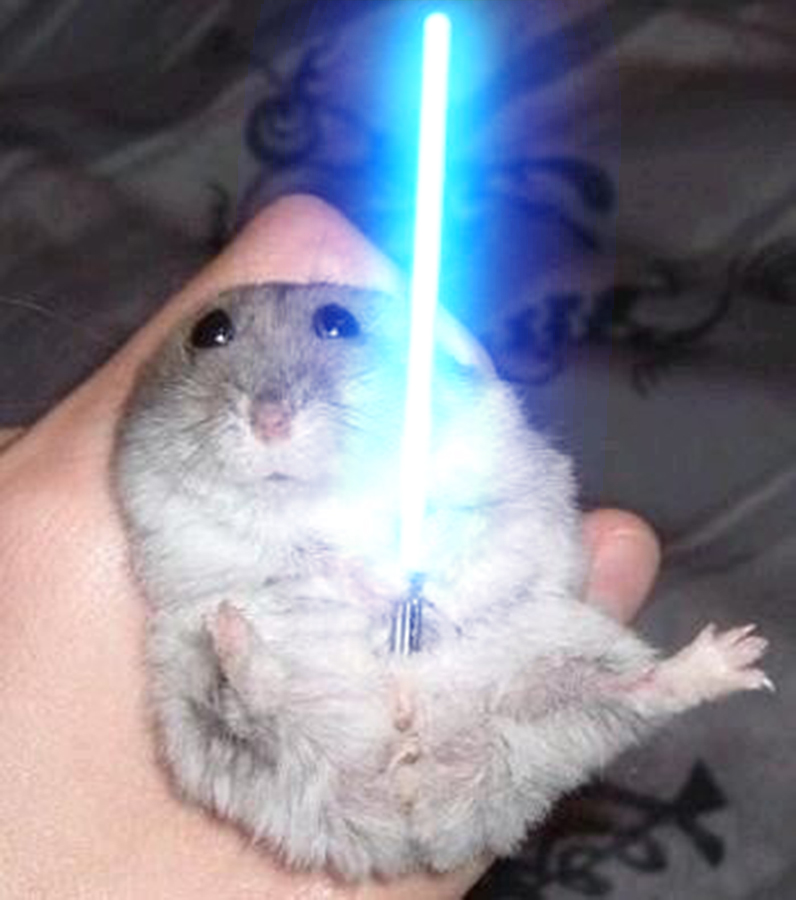 Profile picture of Master Hamster